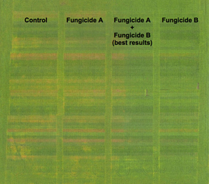 Agriculture Field Mapping